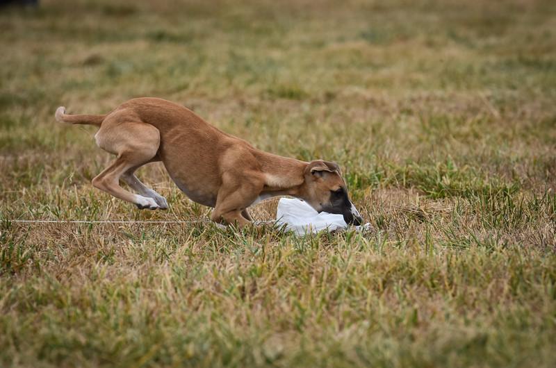puppy-36.jpg