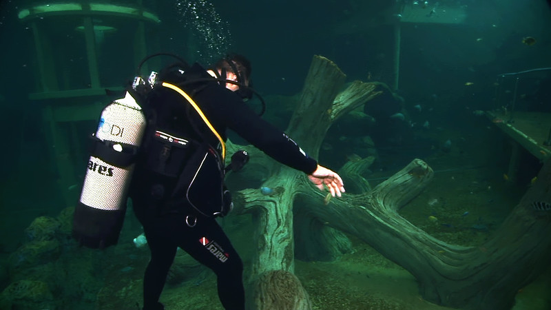 Underwater Walk Edit.00_01_03_05.Still025.jpg