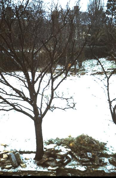 1960-1-13 (2) Snow back garden Simons.JPG