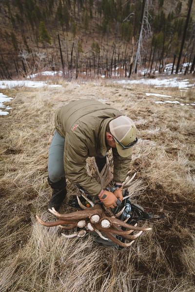 Sam Averett (samaverett) with a haul of elk antlers in Oregon.