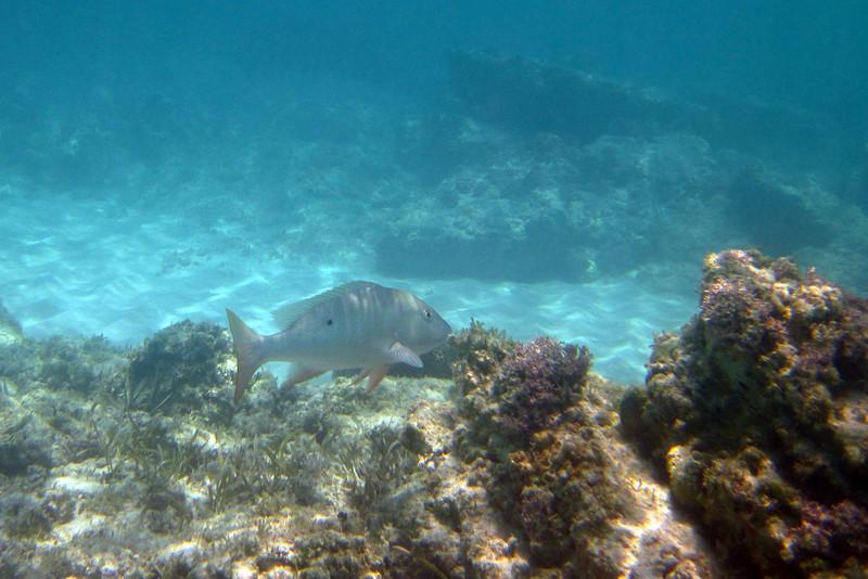 20100608_beaches_180-a.jpg