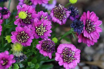 Spring Flowers Apr 2014