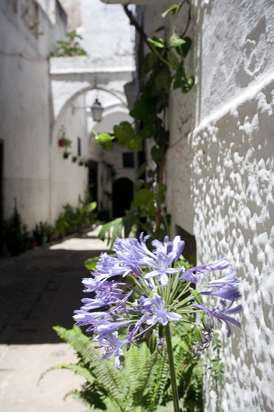 Alley in the medina with the typical Andalusian architecture of Tetouan, Morocco.