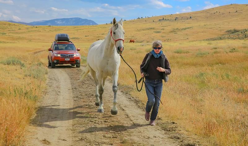 Horses 26.jpg
