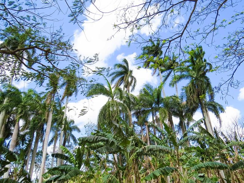 Cuba-7588.jpg