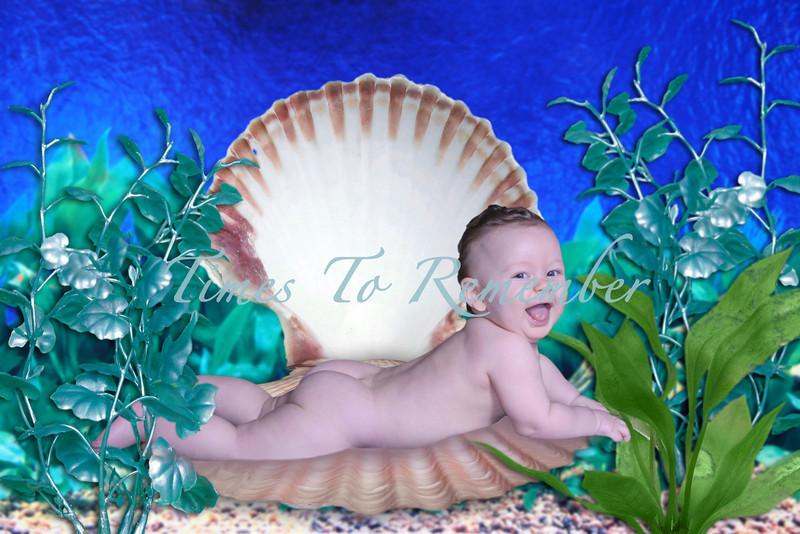 Ocean Shell Scene.jpg