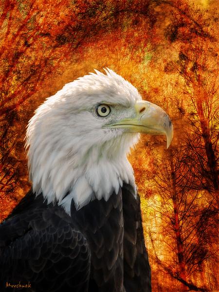Eaglezoo1C.jpg