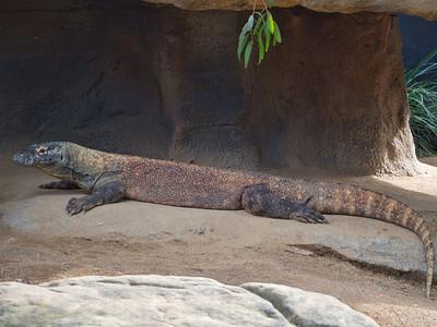 20200710 Taronga Zoo