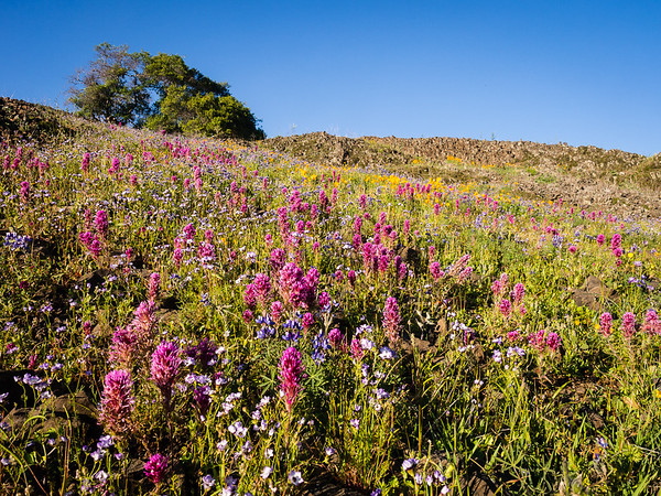 Table Mountain wildflowers I