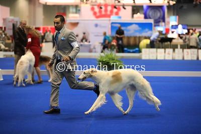 Borzoi 2018 Royal Canin