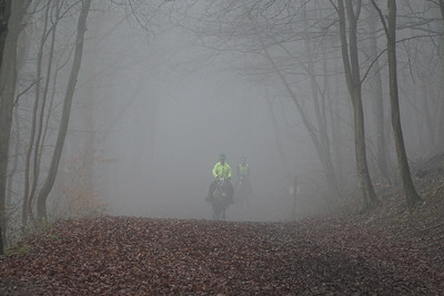 Wendover Woods Sunday 12th March