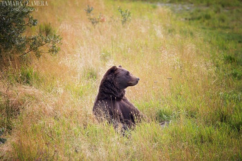 Bear-10-2.jpg