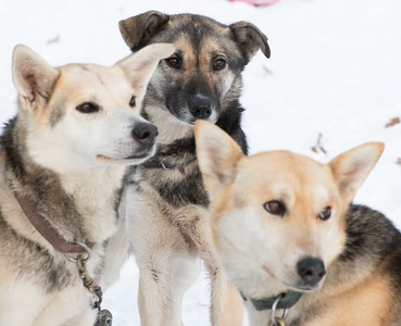 Great faces at the Northern Pines Sled Dog Race 2020