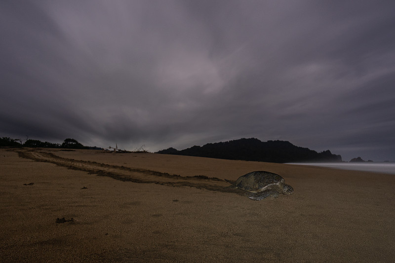 20141231KW-Sukamade_Giant_Turtle.jpg
