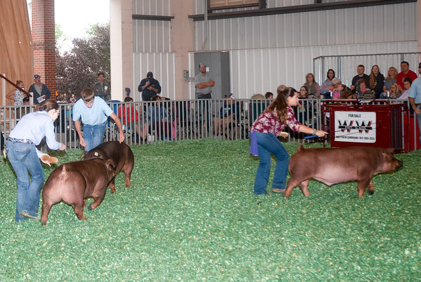 Kansas State Fair Swine