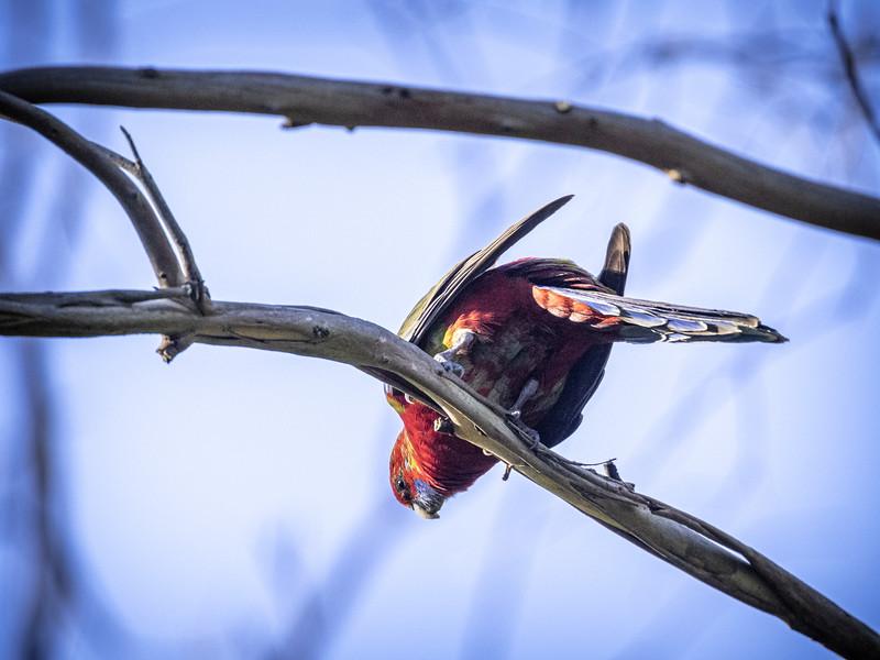 birds 210819 037.JPG