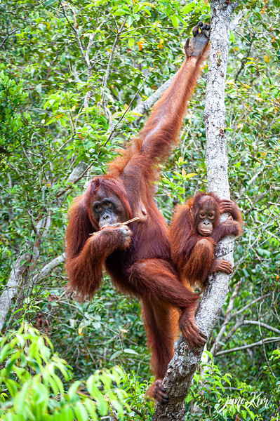2012.10.07_Borneo_DSC_7064-Edit-Juno Kim.jpg