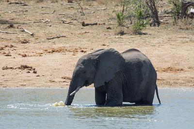 100515 - Graskop -> Kruger NP/Gomo Gomo Game Lodge