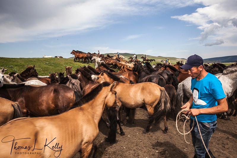 Mongol Horseman