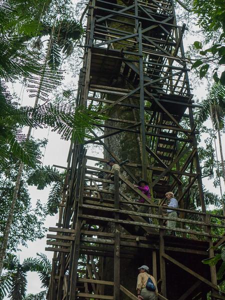 "Sacha Lodge's 135 foot ""tree house"", Kapok Tower observation platform."