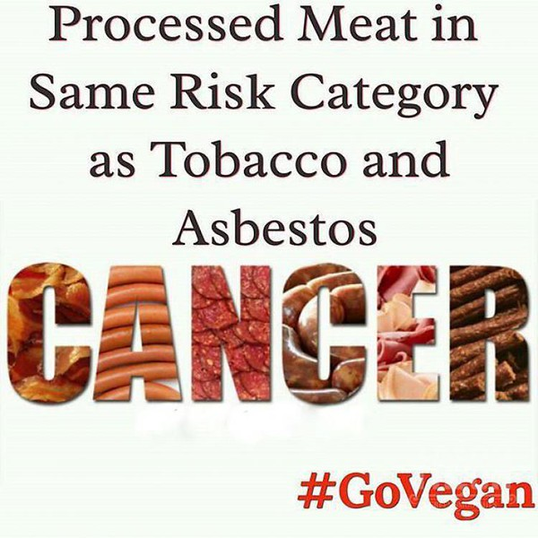 conscious-FreshGreenSmoothies_com-Vegan-Intelligent-Compassionate-raworganicvegan-plantbased-greensmoothies-OrganicGardeningArt-Art-Aeroponics955.jpg
