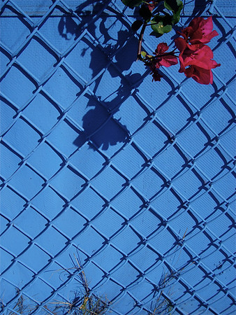 WALL & FENCE OF BLUE+ FLOWERS &  SHADOWS TOO