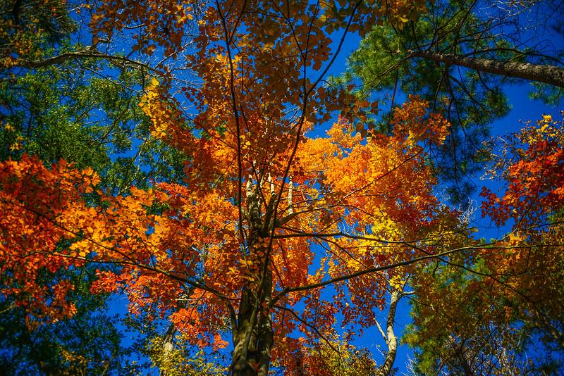 z Fall Colors 2.jpg
