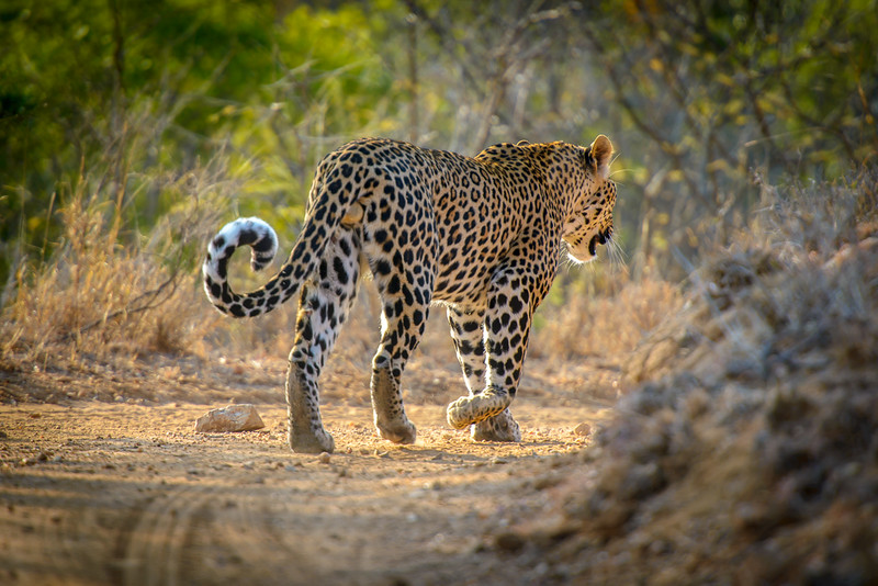 Zuid Afrika 2015 124.jpg