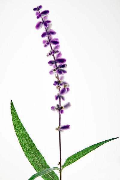 Flower_71I8564.jpg