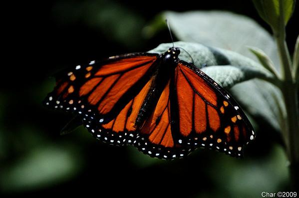 Pavillion of Wings
