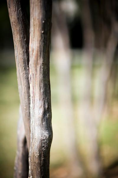 Tree trunks, Seville, Spain