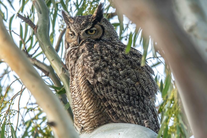 owl2.jpeg