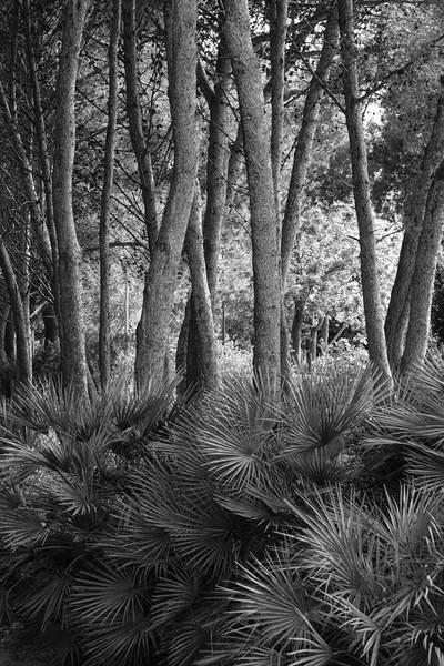 Trees near the summit of Montjuic
