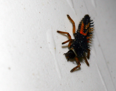 Random Insects (new)