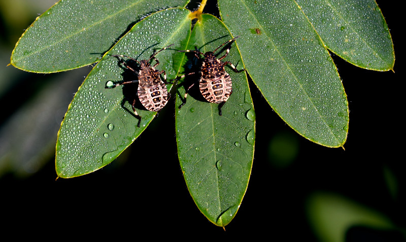 beetles-fichtnerPark.jpg