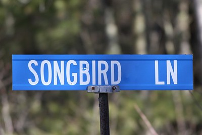 Bird License Plates and Street Signs