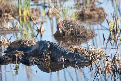 untitled20110129_AlligatorLakeWoodruffFL_7I2B3484_11-01-29
