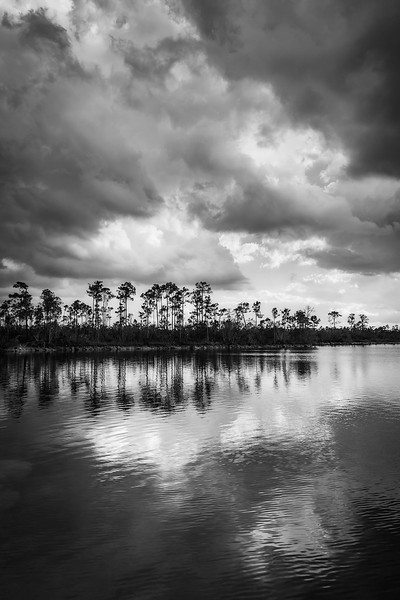 Everglades Afternoon