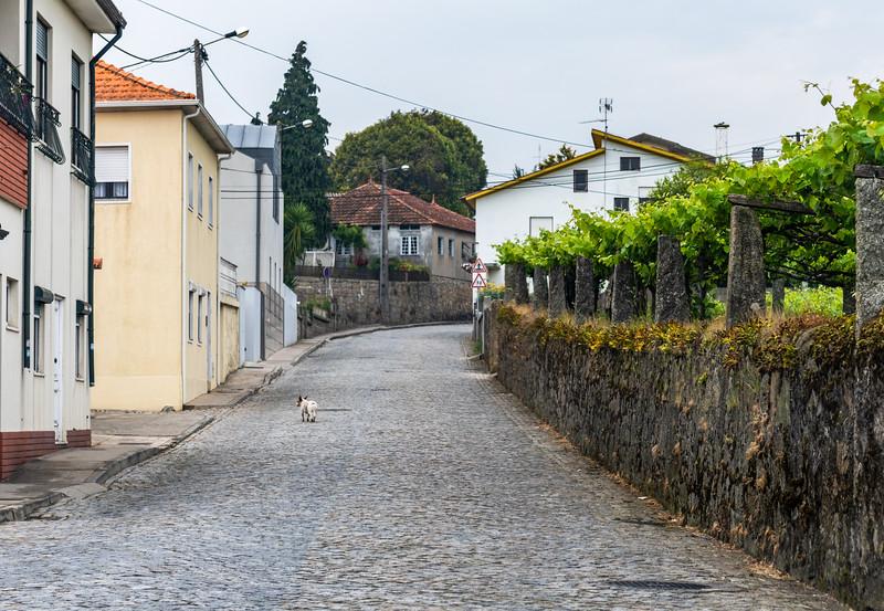 Porto North 8.jpg
