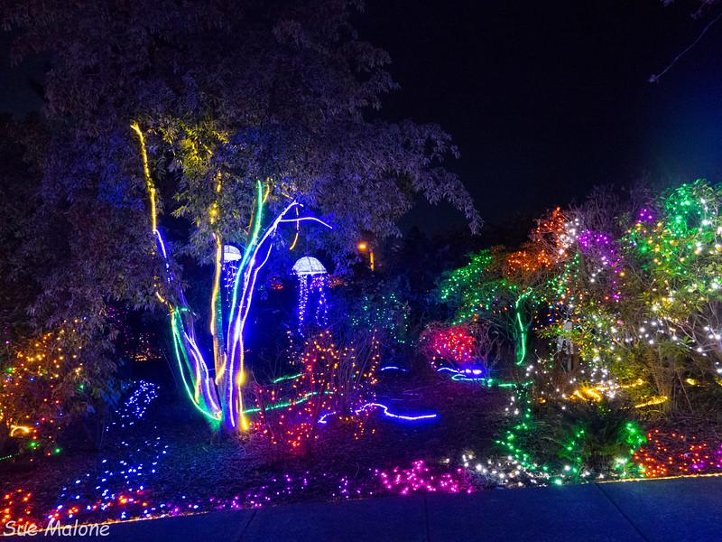 Lights in Brookings-22.jpg