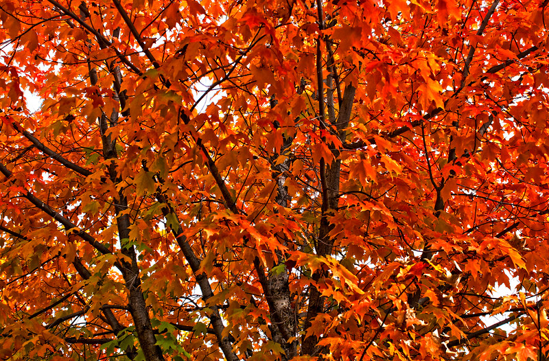 Fall_Colors_HDR3.jpg