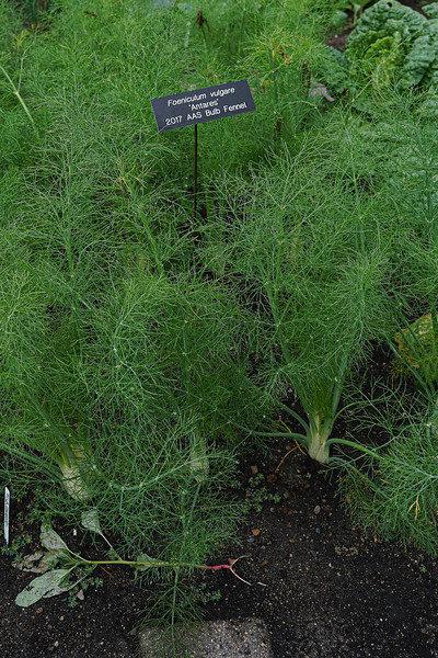 Arboretum, July Harvest-42.JPG