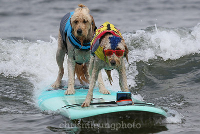 2017-08-05 World Dog Surfing Championships