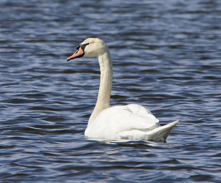 swan 2020 8_edited-1.jpg