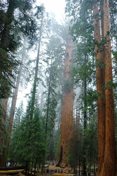 California Day 6 Sequoia 05-30-2017 135.JPG
