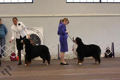 Veterans 7-9yrs Dog PVBMDC Sunday 2/20/2011