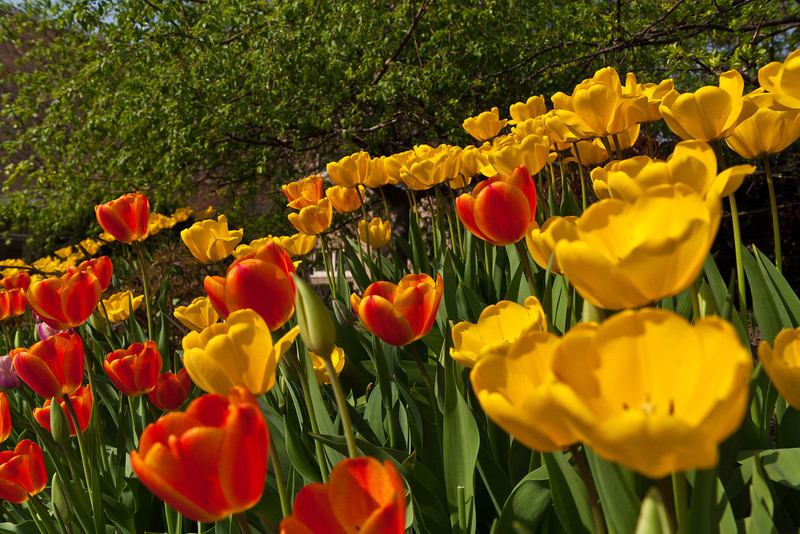 SpringFlowers-30.jpg