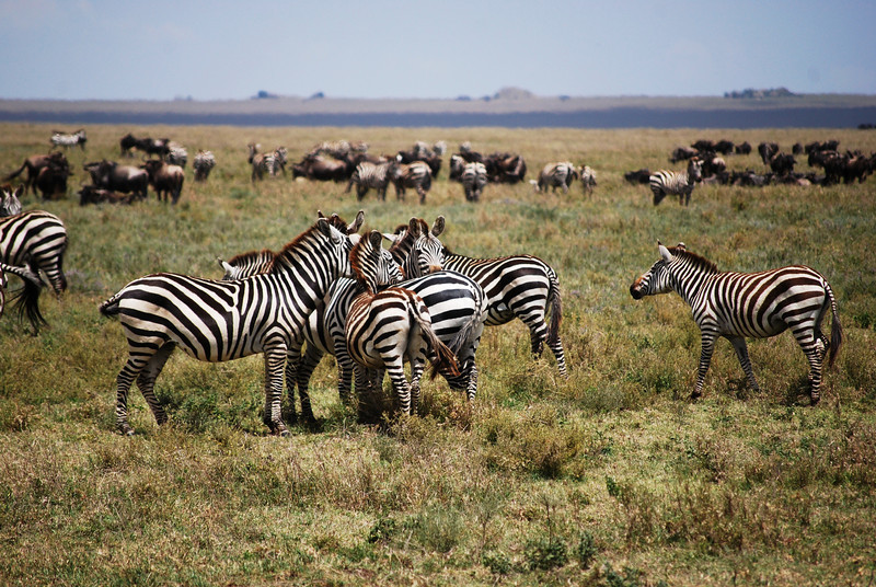 Serengeti (57).JPG