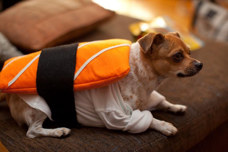 Dog-sushi-halloween2-9.jpg