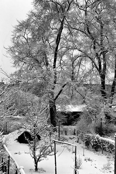 700208 41 Kenilworth, Beeston Backyard 3-12.jpg